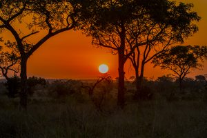 africa, cheap flights, cruise deals, holiday packages, travel insurance