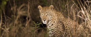 Africa, cheap flights, cruise deals, holiday packages, groups, tours, travel insurance