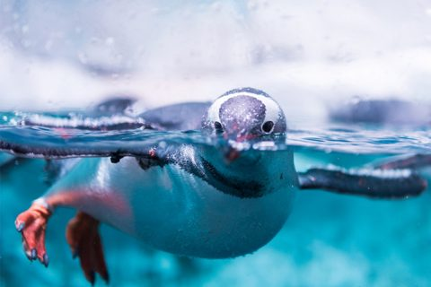Antarctica, cruise deals, cheap flights, holiday packages, travel insurance