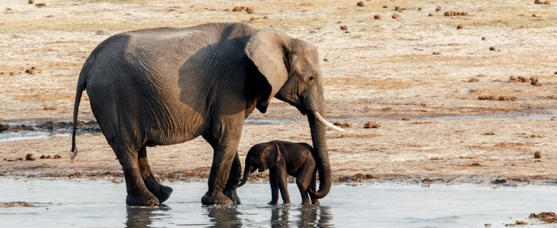 Africa, tours, holiday packages, cheap flights, travel insurance