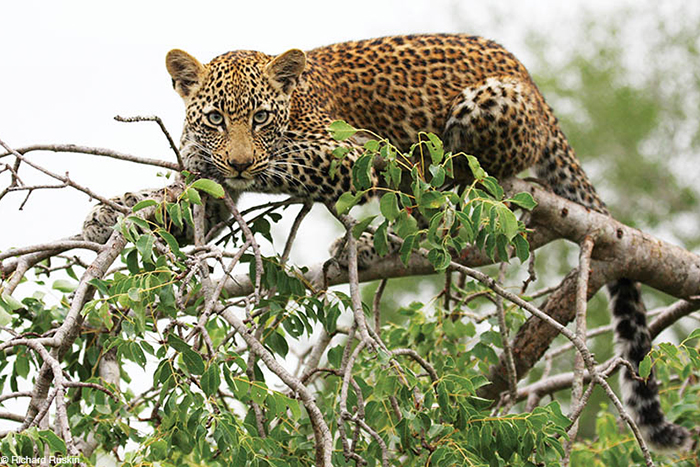 Africa, Zambia, cheap flights, holiday packages, groups, tours, travel insurance