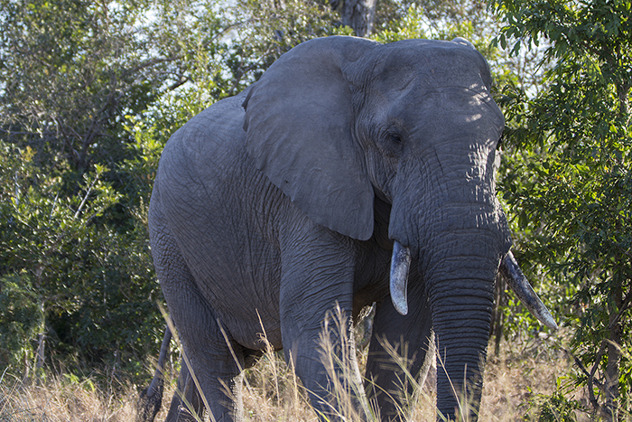 Africa, Tanzania, cheap flights, holiday packages, groups, tours, travel insurance