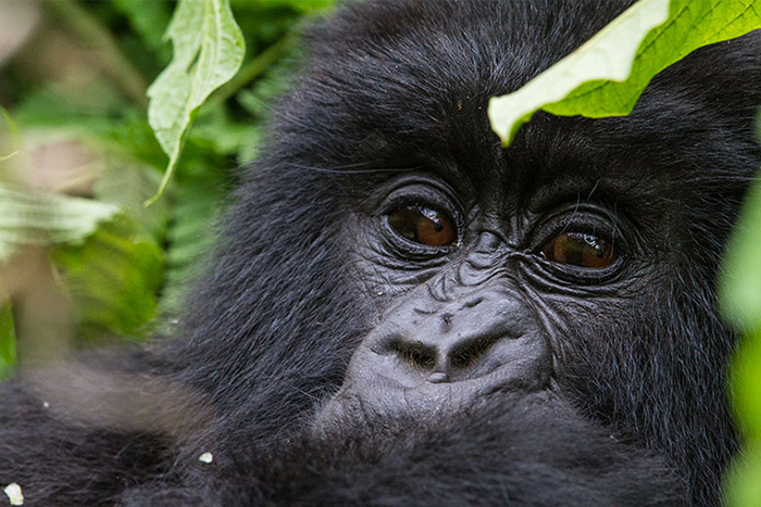 Africa, Rwanda, cheap flights, holiday packages, groups, tours, travel insurance