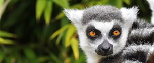 Madagascar, Africa, cheap flights, cruise deals, holiday packages, tours, travel insurance