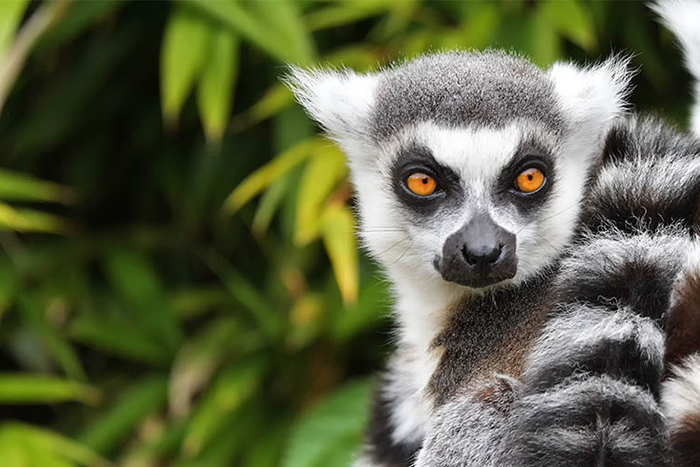 Africa, Madagascar, cheap flights, holiday packages, groups, tours, travel insurance