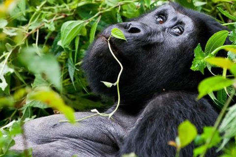 Rwanda, Uganda, Africa, cheap flights, cruise deals, holiday packages, tours, travel insurance