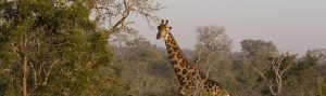Africa, cheap flights, cruise deals, holiday packages, tours, travel insurance