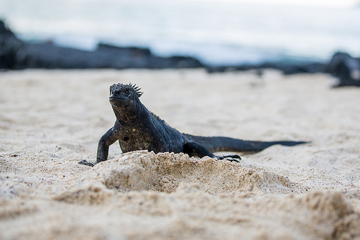 Galapagos, South America, cheap flights, cruise deals, holiday packages, tours, travel insurance