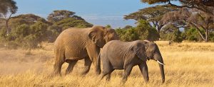 Africa, Tanzania, cheap flights, cruise deals, holiday packages, tours, travel insurance