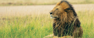Africa, Kenya, Tanzania, Tours, Groups