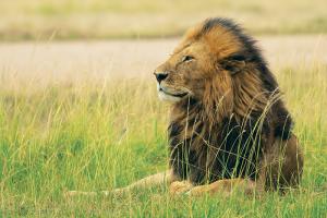 Africa, Kenya, Tanzania, flights, tours