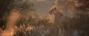 Africa, South Africa, groups, tours